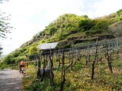 Mosel Radweg zwischen Felsen, Weinbergen und Bahngleisen