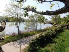 Frühling am Mosel Radweg Radtour Niederlahnstein nach Cochem