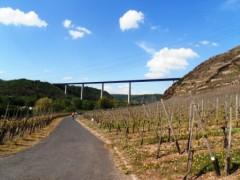 Radwanderer auf dem Mosel Radweg bei Talbrücke Winningen
